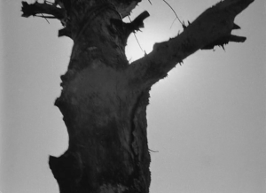 Кадр 5.  Мёртвое дерево.